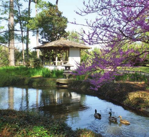 While the garden has always been a beloved and popular destination in Hermann Park, improvements are planned to make it more accessible and add more authentic Japanese-style garden features.