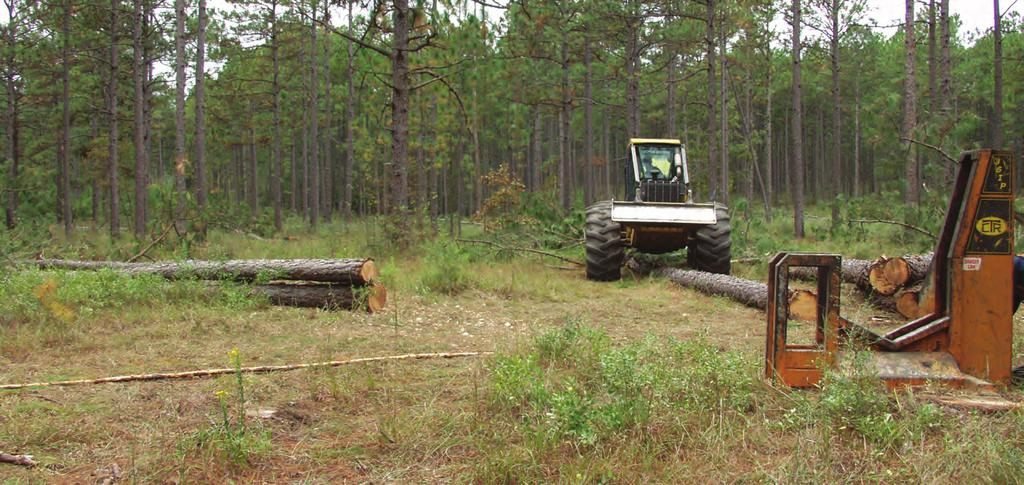 The thinning of timber can generate additional income and improve habitat for a diversity of wildlife.