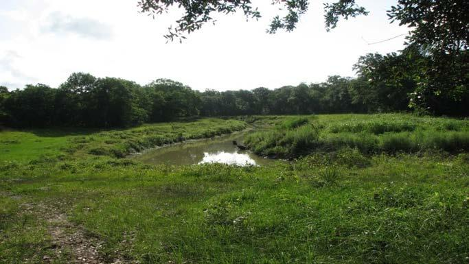 1100 acres Adjacent/nearby other conservation efforts
