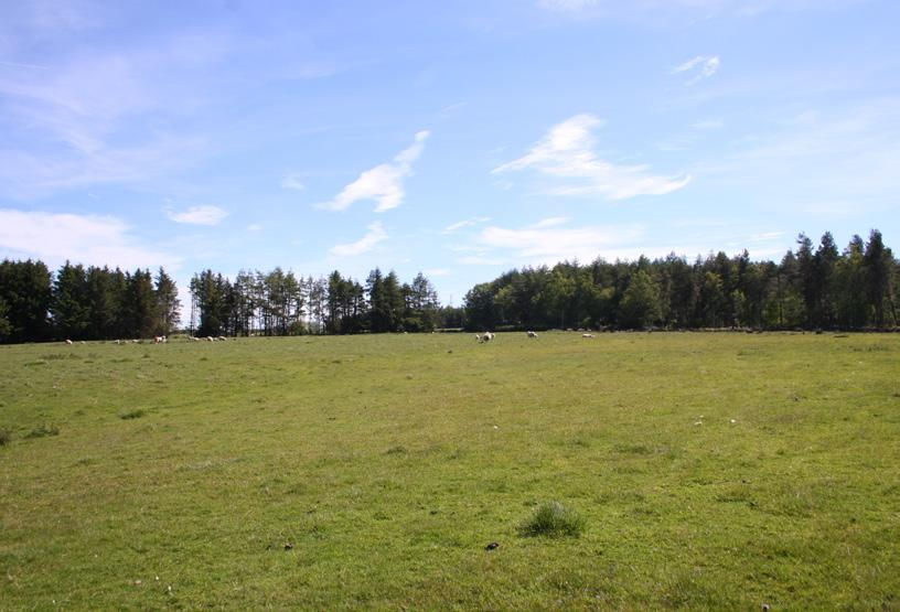 Former Established and young woodlands part of Glassingall Estate. About 212.75 Acres (86.10 Hectares). For Sale as a Whole or in Two Lots.
