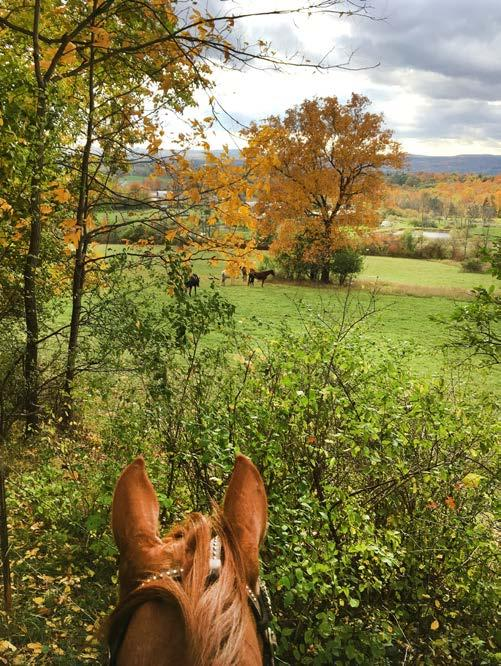 Newell (Schuyler County) Donated by Anastasia Newell, this easement will forever conserve a 104-acre horse farm that provides a valuable buffer to