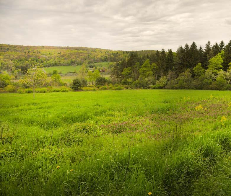 Paige (Schuyler County) This 62-acre easement, donated by Richard Paige, protects frontage on Taughannock Creek, a tributary to Cayuga Lake and the