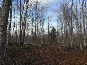 5 acre building wooded lot with sandy soil close to golf course and Lake
