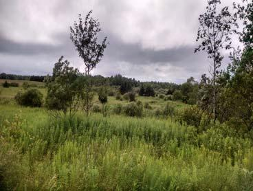5 acre parcel of land on snowmobile & ATV  Close to Soft Maple Reservoir.
