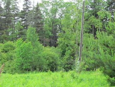 Property accessed by 25 deeded right of way 174 ACRES on BLACK RIVER Home with Detached 4-Car